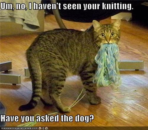 #funny #cat #guilty...: