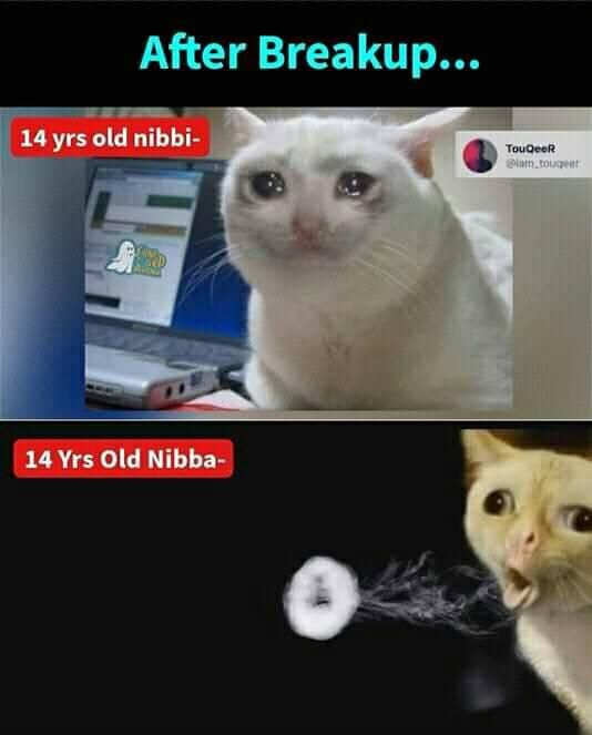 Nibba And Nibbi Funny Images Laughter Really Funny Memes Some Funny Jokes