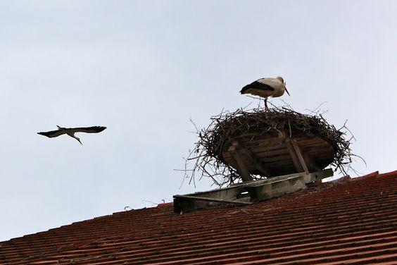 Storks in Salem