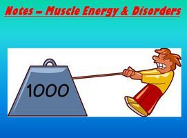 muscular system notes - muscle energy & disorders powerpoint, Muscles