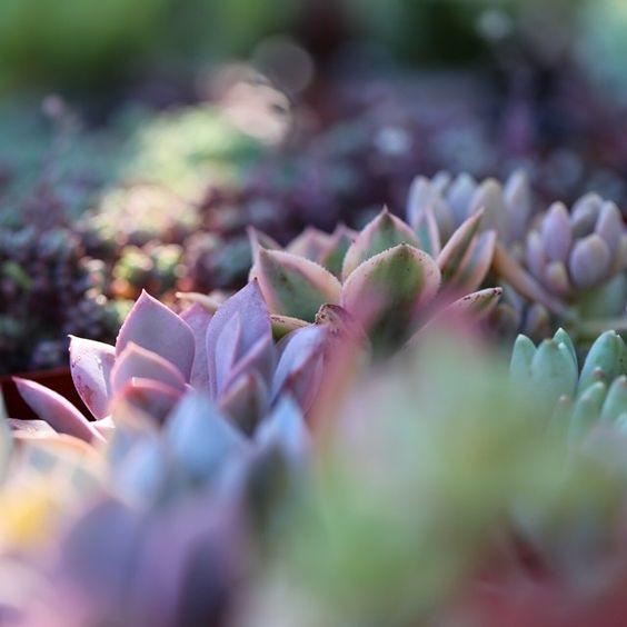 Succulent Garden photo by Dalla Vita.