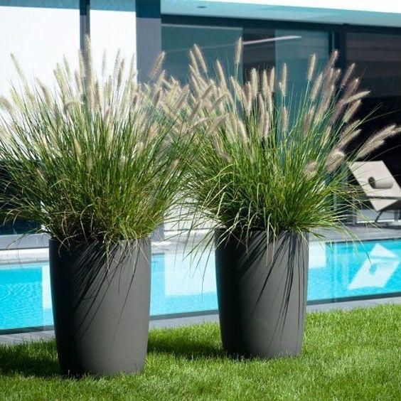 Modern kertekben is jól mutat: lámpatisztítófű / Pennisetum (Fountain Grass) is highlighted in this photo. Bottlebrush plumes contrast beautifully with modern-looking containers.