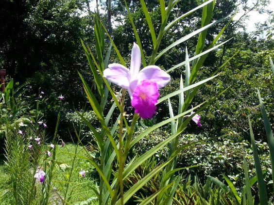 Flores del Soconusco