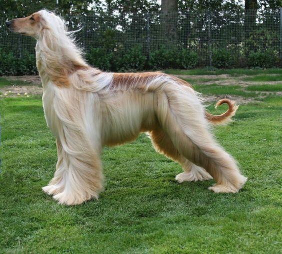 Perros con los más extravagantes peinados - Vida Lúcida: