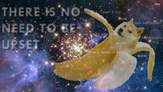 2939cd598336c252e2502a261120dc93 funny doge doge meme doge pattern wallpaper meme wallpapers 27481 utter non,Doge Meme Wallpaper