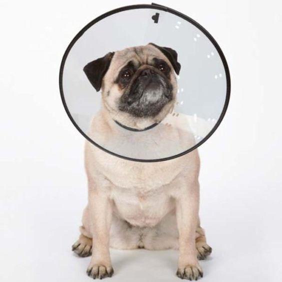 Up Dog Collar