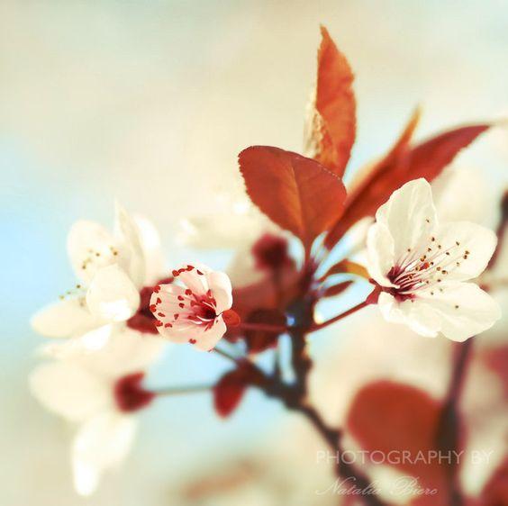 Sakura 9 by *nabi4 on deviantART