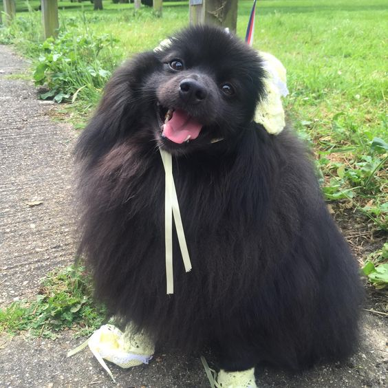 My mum kept my baby clothes for me to put on my future children so I did (@codexthepomeranian on insta)   http://ift.tt/28K415T via /r/dogpictures http://ift.tt/28JAnRW  #lovabledogsaroundtheworld