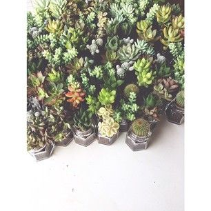 Instagram photo by da_flor - Suculentas nos potinhos de geleia |  #daflor #flor #florist #flowershop #floricultura #florindoaselvadepedras #...