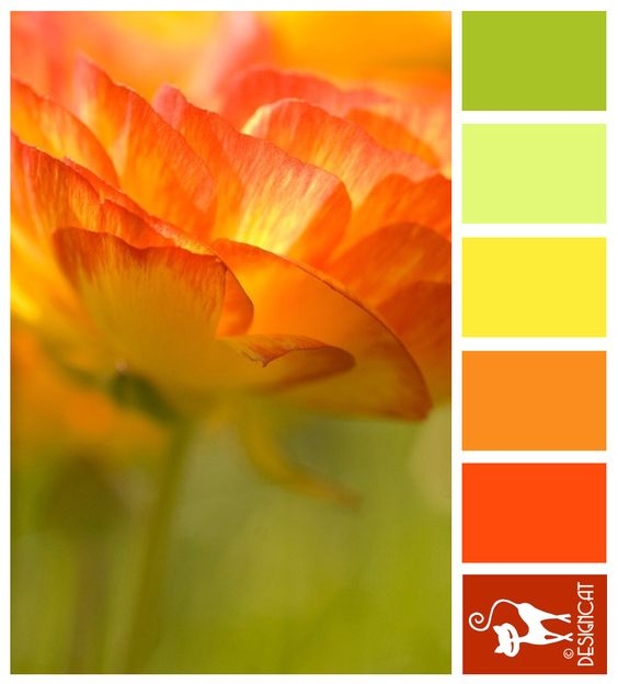 Sun Burst: Green, pastel, Leaf, Yellow, Orange, Red, Terracotta - colour Inspiration Pallet