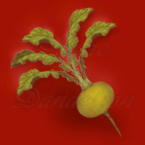 """Golden Ball also called Boule D'or Turnip has tender 3"""" - 4"""" globe shaped roots with yellow skin & flesh."""