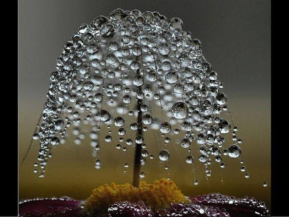 Árvore da água
