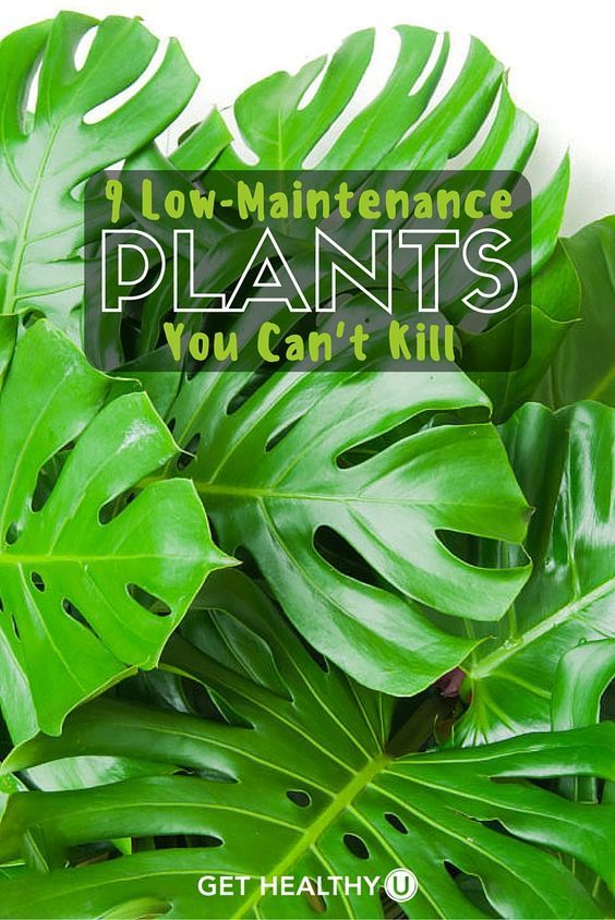 9 Low Maintenance Plants You Can T Kill Get Healthy U Low