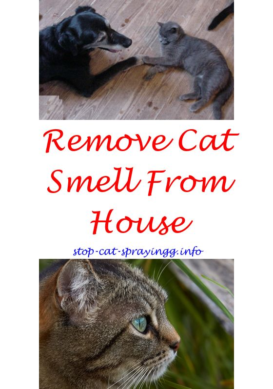 Cat Pee Prevention Cat Spray Cat Pee Smell Cats Smelling