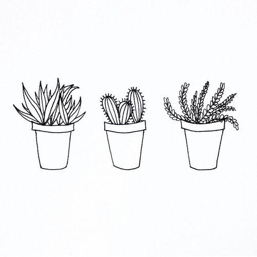 tumblr plants - Google Search | Plants | Pinterest | We ...