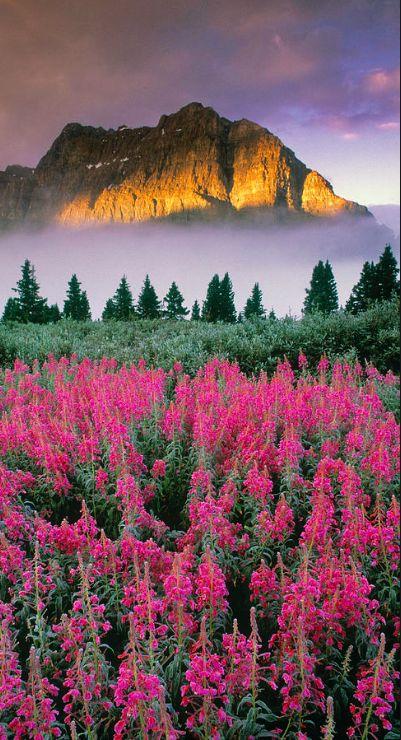 光さす岩山と赤い花が綺麗で美しい花畑