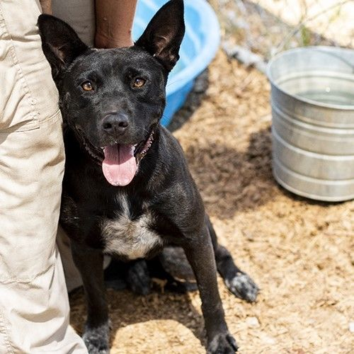 Dogs For Adoption Petfinder Dog Adoption Dogs Pet Adoption
