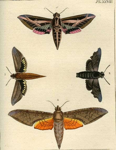 Drury Illustrations Of Natural History