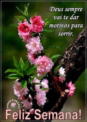 Flores e Frases: Deus sempre vai te dar motivos para sorrir...