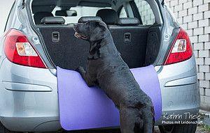 Easy Dogs / Wenn der Hund nicht gerne im Auto mitfährt, Jennyfer Schmidtlein
