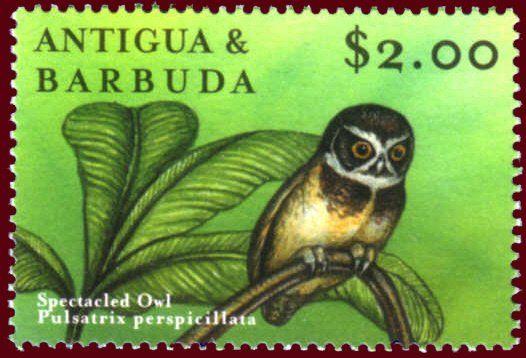 Spectacled Owl - Striking Black, Yellow and White   Owl, Beautiful birds,  Animals beautiful