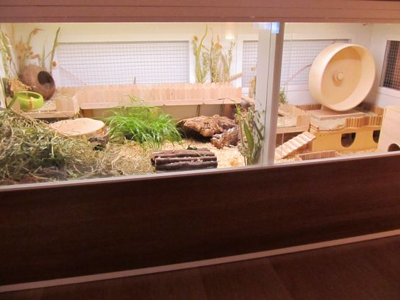 Amazing natural themed hamster habitats ideas for dwarf for Hamster bin cage tutorial