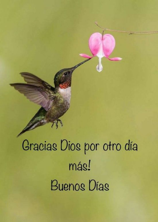 Mensajes De Buenos Dias Con Frases De Motivación Alegres