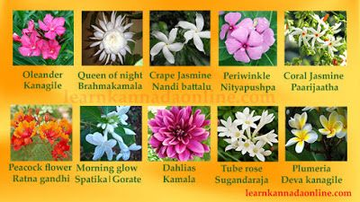Flower Names In Kannada Part2 Bunga