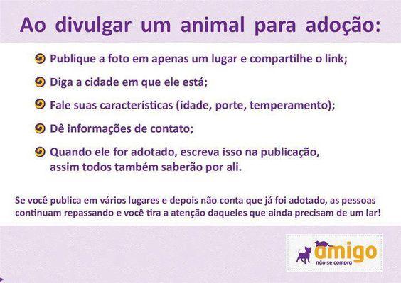 Ao divulgar um animal para adoção, dê o máximo de informações que puder.