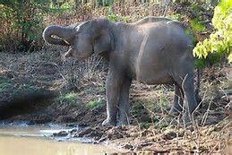 Elephant - Bing Images