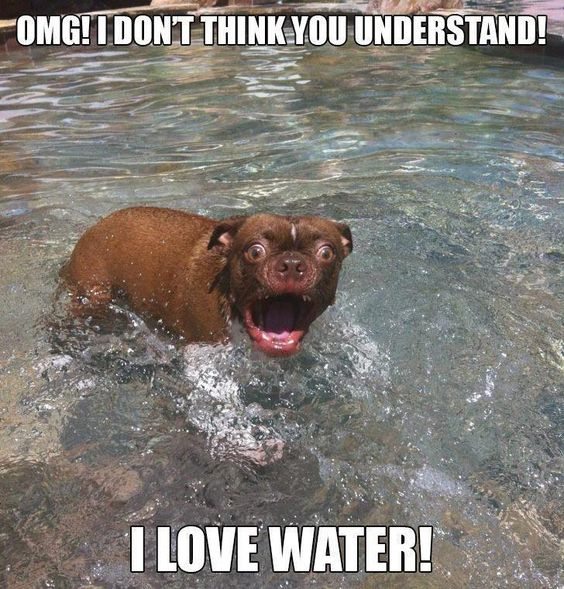 x: Funny Animals, Giggle, Funny Dogs, Funny Pics, Funny Pictures, Funny Stuff, Funnystuff