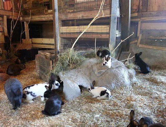 rabbit farming project report pdf