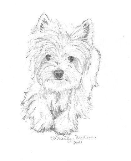 Impresión de Casey de lápiz de dibujo Westie de 8 x 10 por baybeari