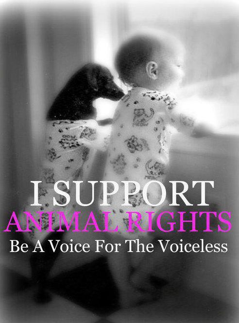 Image result for Help the voiceless