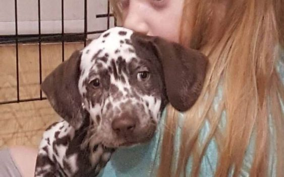 Dog Owners Warned To Watch Out For Drones After Dognappers Steal Autistic Girl S Dalmatian Therapy Dogs Dog Owners Pets For Sale