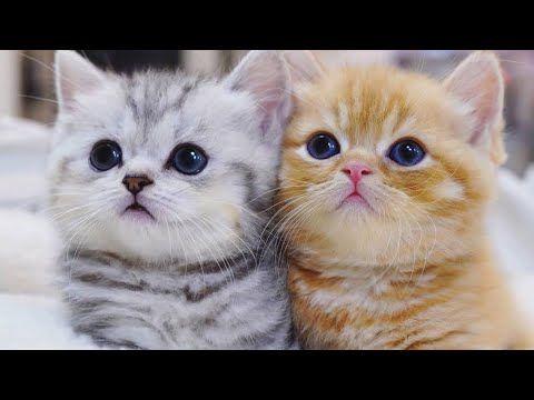 Bayi Kucing Persia Lucu Anak Kucing Anggora Kucing Gemes Cats Kitten Aww Animal Youtube In 2021 Kitten Animals Kucing Persia
