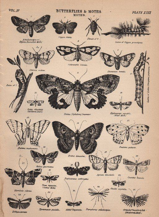 Victorian Butterfly Graphics - The Graphics Fairy