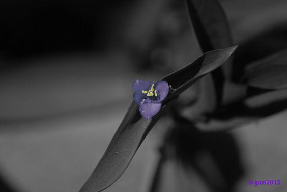 Bella solitaria Foto Gustavo Navarro