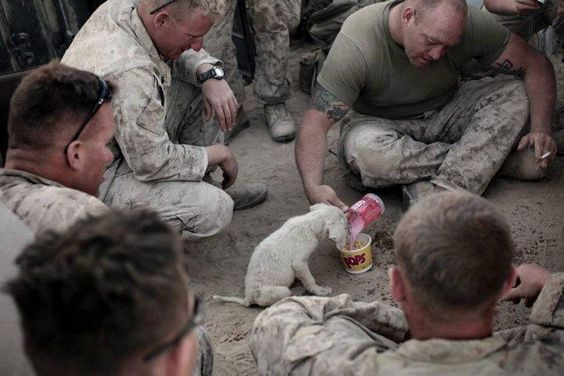 Soldiers feeding a dog overseas that was a stray.  #military #dog