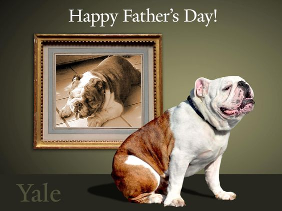 Handsome Dan joins in wishing a Happy Fathers Day to all the dads, including his sire, Sampson.