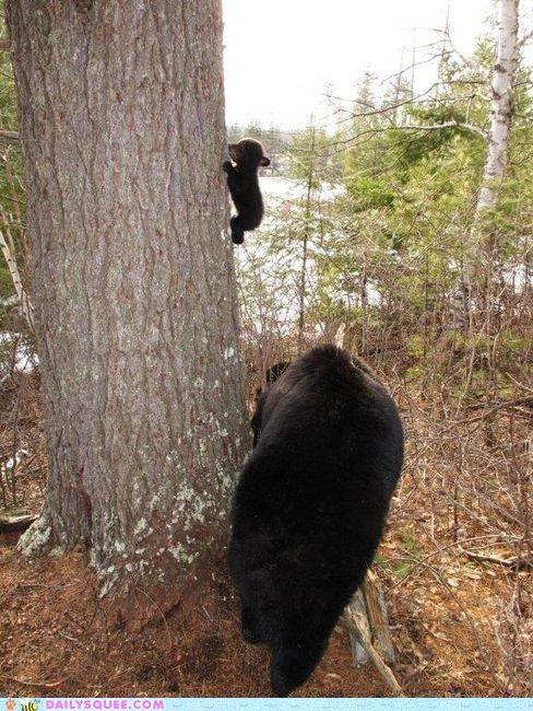 tiny bear cub!!: Climbing Lesson, Bear S, Black Bear, Amazing Animal, Baby Animals, Bear Climbing, Baby Bears, Adorable Animal