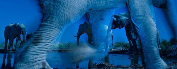 Die Sieger des renommierten Wettbewerbs  Wildlife Photographer of the Year 2013  stehen fest. Den ersten Platz errang der südafrikanische Fotograf ...