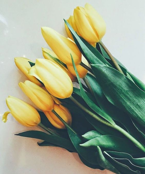 YELLOW TULIP - Getting married in March? See our seasonal flowers board for a full list of flowers that are available for florists to buy in March for a Spring wedding. Whether you are planning a romantic, wild and natural bouquet or bright and vibrant table centrepieces - our month by month boards cover every possibility for every month be it Winter, Autumn or Summer! xx