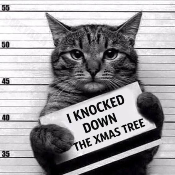 How to Keep Your Cat Out of the Christmas Tree: