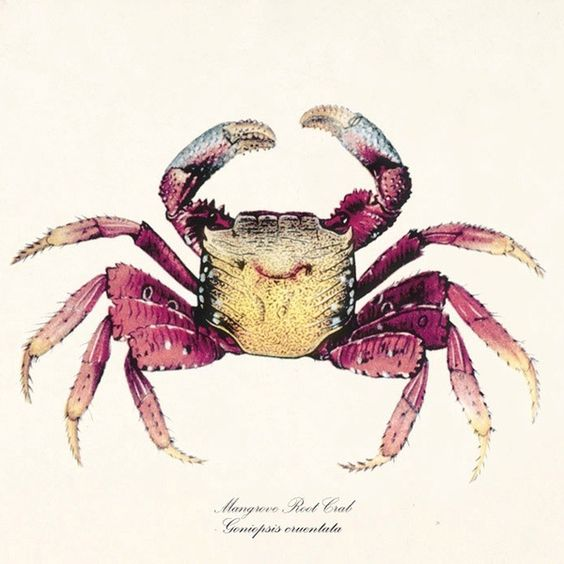The crab, cancer sign