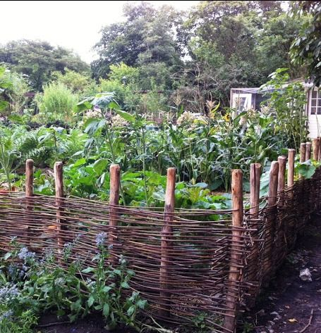 Fence wattle fence and wicker on pinterest for Kitchen garden fence