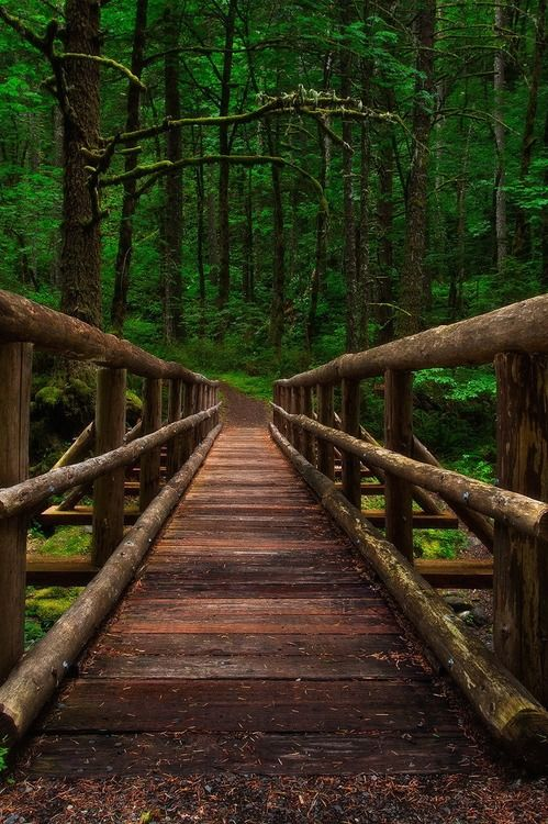 Forest Bridge, Columbia River Gorge, Oregon photo by michael