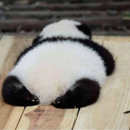 04Cute Pandas