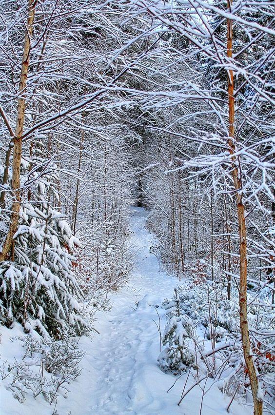 Winter Wanderweg