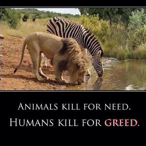 Fermare la caccia di animali in via di estinzione e innocenti!  (Via stopanimalcruelty0 su Instagram):